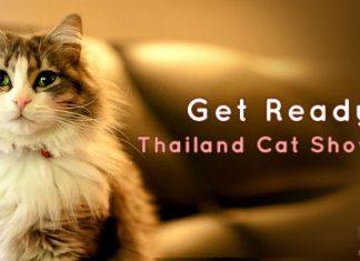 ไปเที่ยวงาน Thailand Cat Show 2012 กันดีกว่า !!!