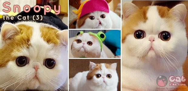 เกาะกระแสแมวสนูปปี้ (snoopy) แมวไม่ธรรมดา…ดังจนได้ออกทีวี !!!