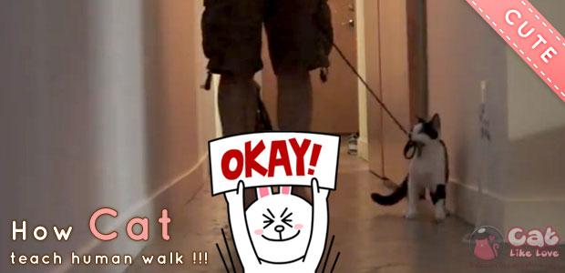 คลิปน่ารัก สอนแมวให้จูงเจ้านายเดินเล่น!?!
