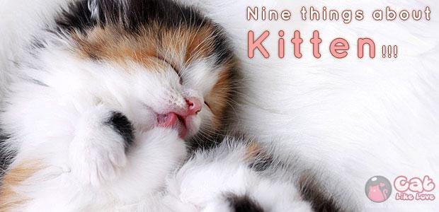 9 เรื่องน่ารู้ สำหรับก้าวเล็กๆ ของลูกแมวเหมียว