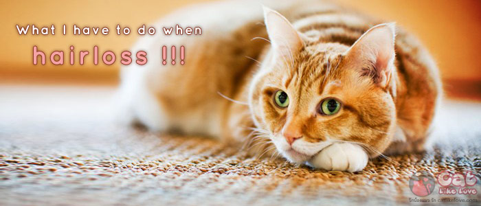 อ๊ากกกก…น้องแมวขนร่วงทำไงดีละเนี๊ยยยยยย !!!