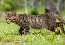 [Knw] ทำไมน้องแมวน้ำหนักลดลง?