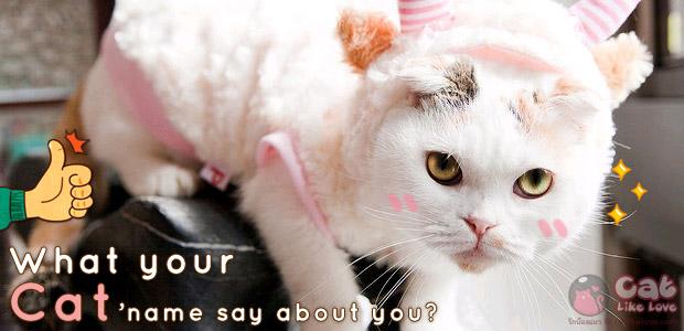 เทคนิคการตั้งชื่อแมว และทายนิสัยจากการตั้งชื่อน้องแมว !!!