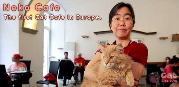 เปิดแล้ว!!! คาเฟ่แมวแห่งแรกในยุโรป