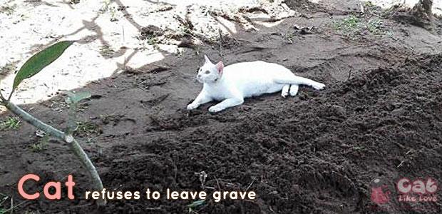 แมวขาวมาร่วมงานศพเจ้านาย ไม่ยอมห่าง