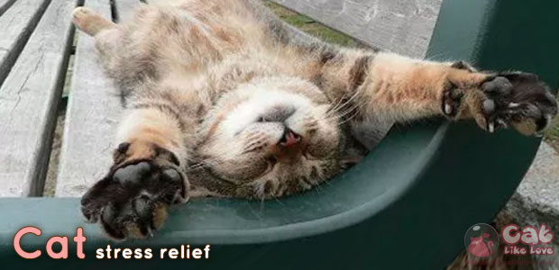 แมวช่วยลดความเครียด-ซึมเศร้าได้!