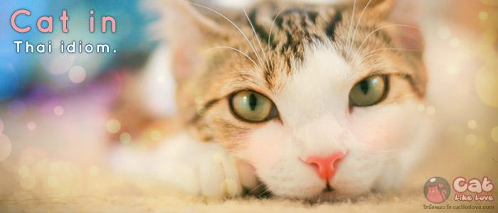 เค้าว่ากันว่า แมวมองเห็นในที่มืด…จริงป๊ะ !!!
