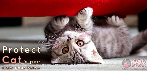 ทำไงดี!!! น้องแมวฉิ้งฉ่องหน้าบ้าน T^T