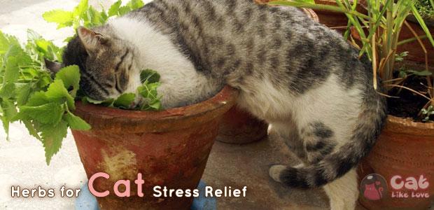 คลายเครียดให้น้องแมวด้วยสมุนไพร