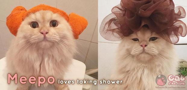 """""""Meepo"""" แมวเหมียวผู้คลั่งไคล้การอาบน้ำ"""