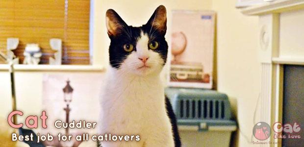 """[News] อาชีพใหม่!! """"นักกอดแมว"""""""