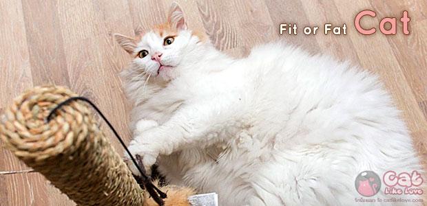 """[Knw] วิธีตรวจว่าน้องแมว""""อ้วน"""" รึเปล่า?"""