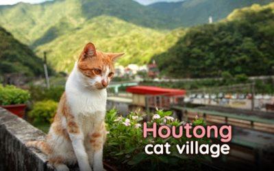 [News] ไปเที่ยวไต้หวัน ณ หมู่บ้านแมวหูตง~